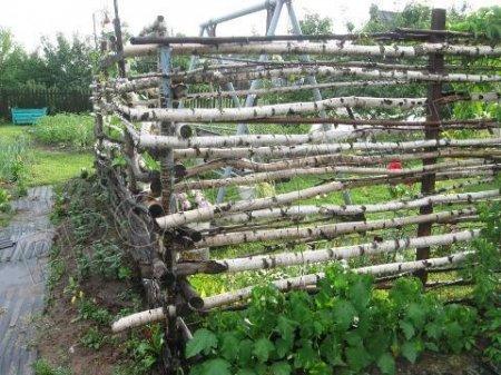 Ограда для винограда своими руками