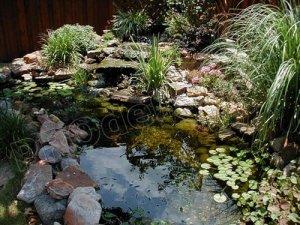 Уход за прудом в саду