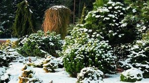 Зимний декор сада