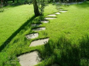 Восстановление больного газона