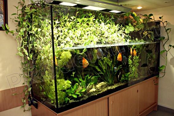 Тумба для аквариума из ДСП своими руками: пошаговая инструкция 17
